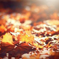 November 2020: Living in Gratefulness